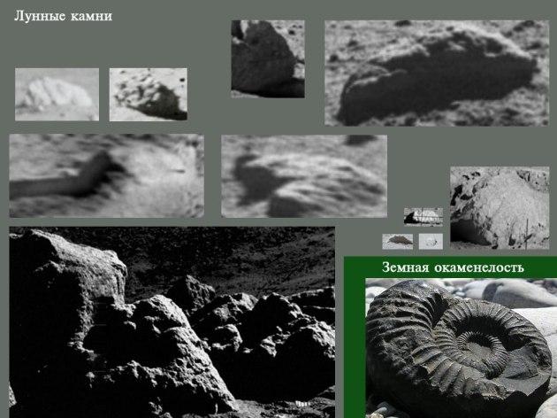 Редкие, отличительные камни на Луне, в основном встречаются обычные пористые булыжники (без слоев) Собранные камни похожи на океанические окаменелости. Не исключена игра тени.